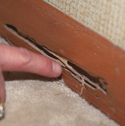 CT Home Inspection Company Termite Inspection